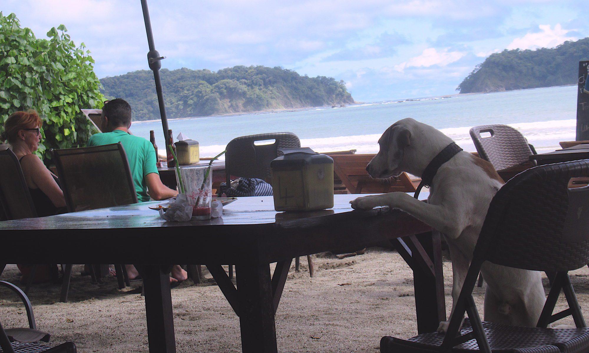 Auswanden Costa Rica, lecker Essen