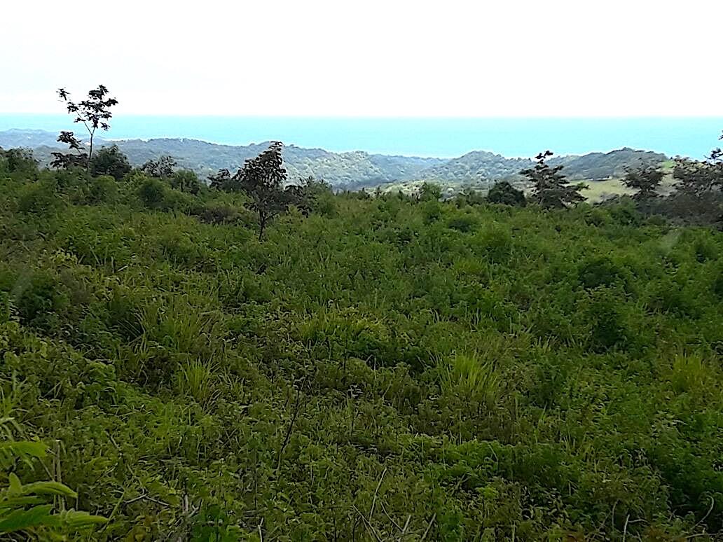 Finka Grundstück Costa Rica mit Meersicht in Guanacaste verkaufen