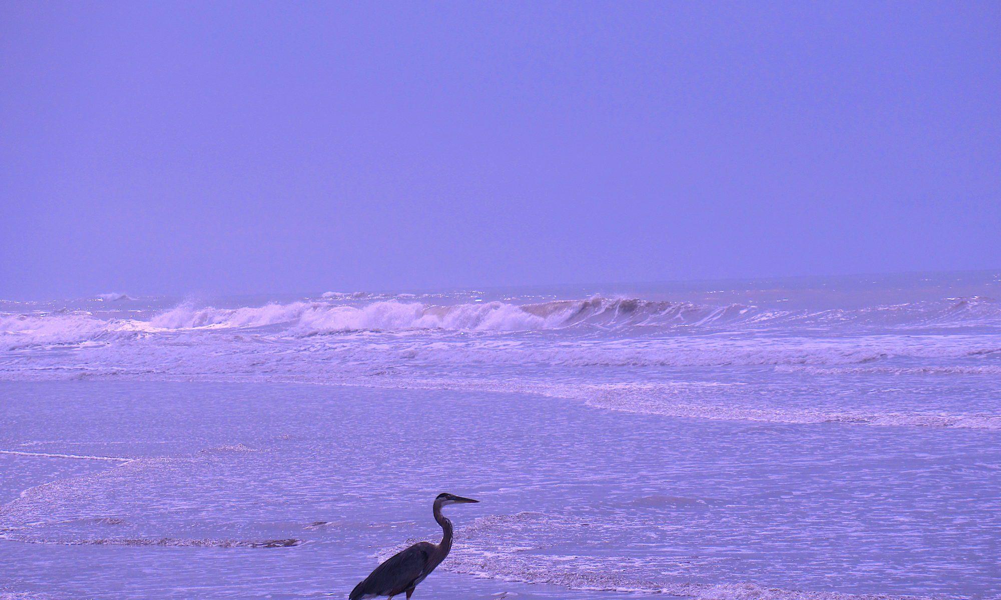 Meeresvögel Costa Rica