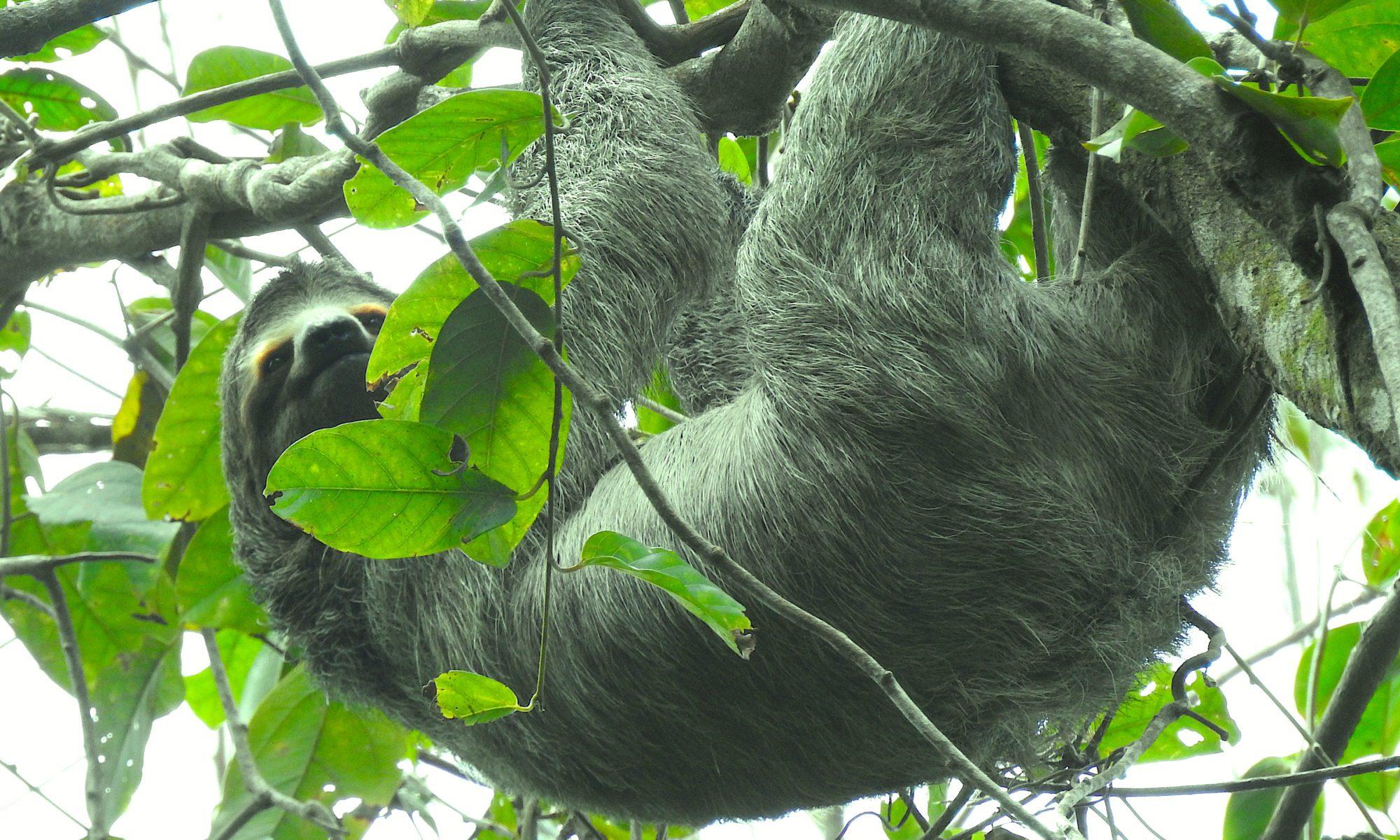 relaxen im Dschungel